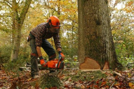 Chopping a tree